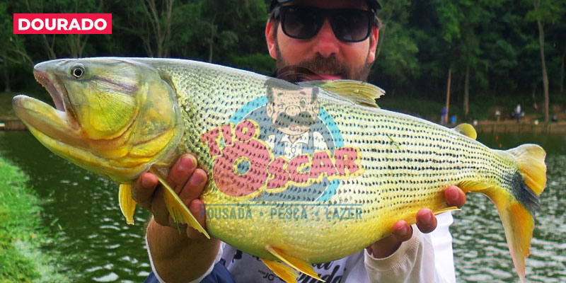 tio-oscar-peixe-dourado