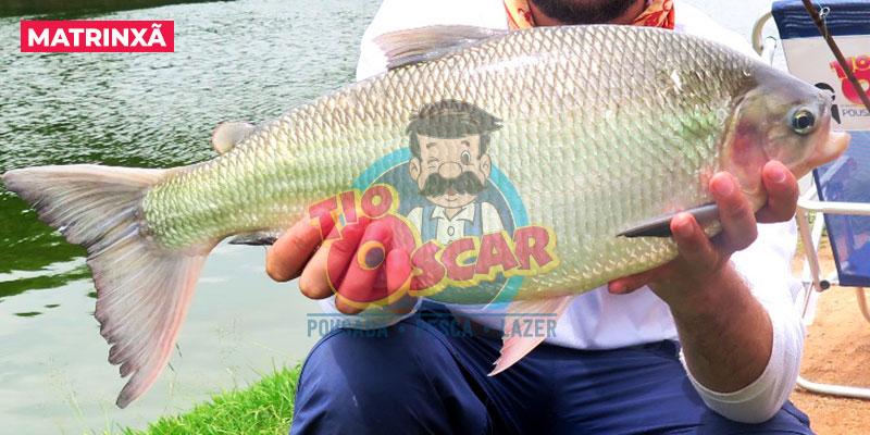 tio-oscar-peixe-matrinxa