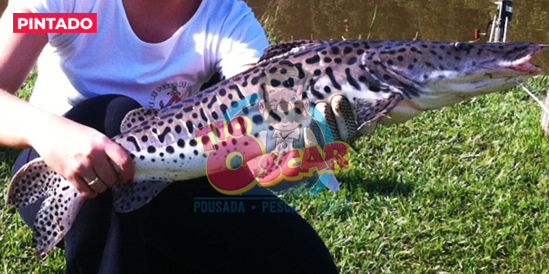 tio-oscar-peixe-pintado