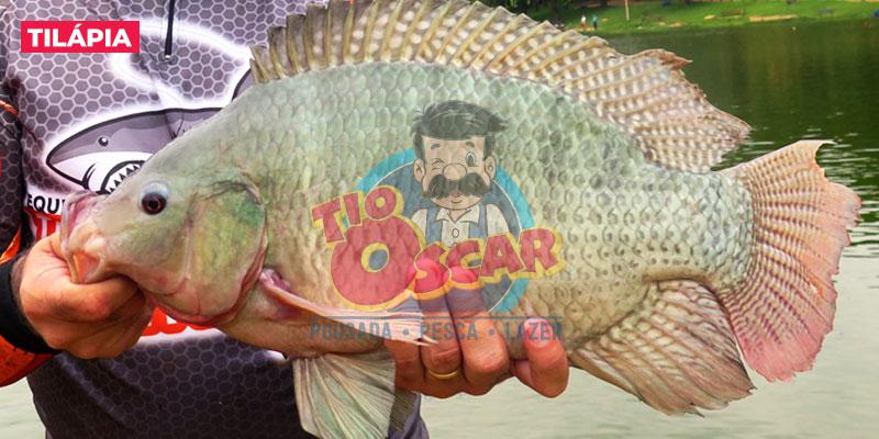 tio-oscar-peixe-tilapia